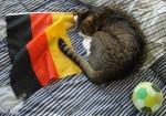 Deutschland Katze